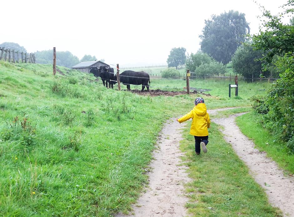 KaN_ArcherWarder_Wasserrinder_AbDurchsGelände_Foto_(c)www.kielamnil.de